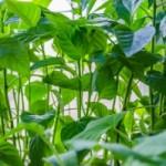 Naturalna pielęgnacja roślin