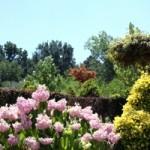 Piękny i praktyczny ogród