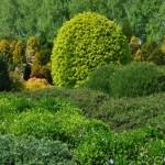 Jak dobrać drzewa i krzewy?